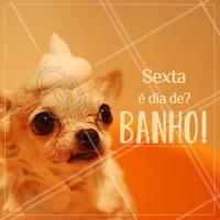 Traga seu pet para o banho e deixe ele lindão para o final de semana! 😍 #banho #pet #sexta #ahazouapp #ahazoupet #banhoetosa #petshop