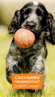 Boa parte das pessoas reclamam que seus cães são hiperativos, destrutivos, ansiosos, latem demais ou têm comportamento compulsivo. A solução, em muitos casos, é simples. Passeios diários com o seu cão pode ajudar, E MUITO, no comportamento deles. Os passeios gastam a energia do animal, e fazem com que eles fiquem mais relaxados. #dogwalker #dogs #passeio #passeador #ahazouapp #ahazoupet #pets #exercicio