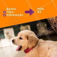 Montamos um combo que seu pet vai amar! Agende um horário com a gente. #pet #banho #ahazoupet #tosa #hidratacao #pelos lindos