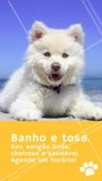 Quer um pet limpinho e cheiroso? Então agende um horário. #pet #banho #ahazoupet #tosa
