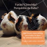 Não importa qual pet seja o seu, todos eles precisam de cuidados. E aqui temos os melhores especialistas para cuidar do seu bichinho. ☎ XXXXXXXXX #veterinario #vet #pets #ahazouapp #ahazoupet #consulta #furao #chinchila #porquinhodaindia