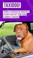 Sem tempo para trazer o seu pet para o petshop? Seus problemas acabaram! Agende um horário que iremos até você! #taxidog #petshop #ahazouapp #ahazoupet #pets