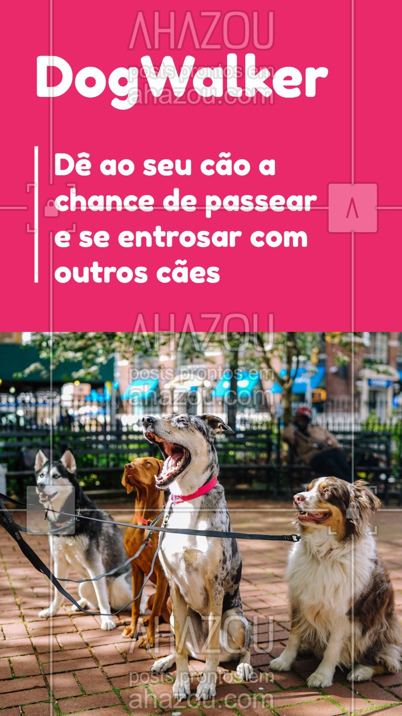 post-imagem-frase-pet-dog-walker-convite-stories-2