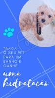 Traga seu pet e ganhe uma super hidratação para ele ficar com os pelos lindos e brilhando. #pet #ahazoupet #banho #promocao