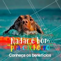 💦 O animal aprende a ter mais autoconfiança; 💦Ajuda na perda de peso e no fortalecimento corporal; 💦Melhora o sono e o estresse, além de maior e melhor qualidade de vida; 💦Articulações mais resistentes e saudáveis; #pet #natacaoparapet #ahazou #dogs #saude #beneficios
