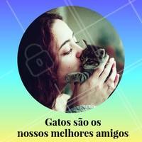 Quer amigo melhor que o seu gatinho? Não existe, né?! #pet #ahazoupet #amigao #cat