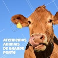 Aqui temos especialistas para atender o seu animal de grande porte. ☎ XXXXXXXXX #veterinario #vet #pets #ahazouapp #ahazoupet #grandeporte