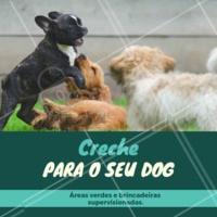 Venha conhecer! Você e seu amigão vão amar ❤️️ #crechedog #dog #ahazouapp #pet