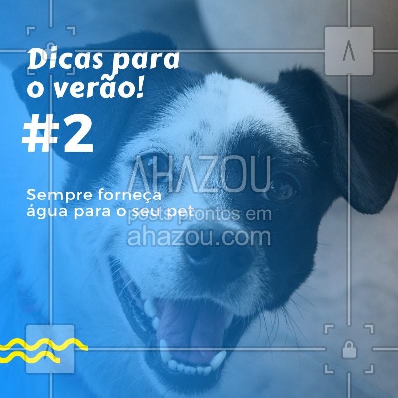post-imagem-frase-petshop-veterinario-temporal-dic-1