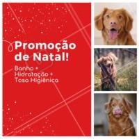 Não perca esse combão! O seu peludo vai AMAR ❤️️🐶😍 #pet #promocao #ahazoupet #natal