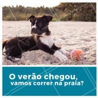 Seu peludo também ama correr na praia com você? #pet #dog #ahazoupet #praia #verao
