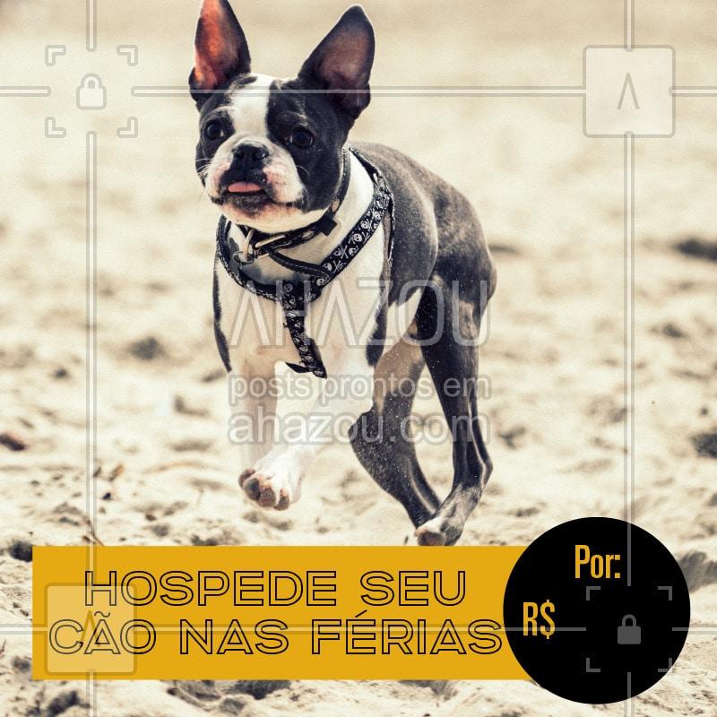 post-imagem-frase-pet-promocional-temporal-3