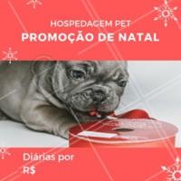 Não perca essa promoção e traga seu peludo para se hospedar com a gente! #hospedagempet #pet #dog #ahazoupet #promocao #fimdeano