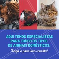 Não importa qual pet seja o seu, todos eles precisam de cuidados. E aqui temos os melhores especialistas para cuidar do seu bichinho. ☎ XXXXXXXXX #veterinario #vet #pets #ahazouapp #ahazoupet #consulta