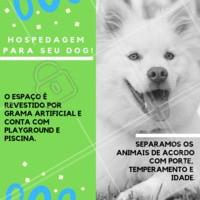 Não sabe com quem deixar seu pet? Nós cuidamos dele, com MUITO amor! 🐶🐱❤️️ Entre em contato para maiores informações XXXXXX #pet #hotel #hospedagempet #ahazoupet #ferias