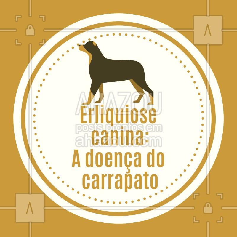 post-imagem-frase-veterinario-dicas-4