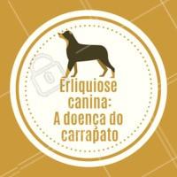 A Erliquiose (ou Erlichiose) é uma doença geralmente comum em cães. A transmissão acontece atráves de um carrapato, ele suga sangue de um cachorro contaminado e transmite para outros cachorros que serão picados pelo carrapato contaminado. É uma doença mais comum durante o verão, já que os carrapatos precisam de calor e umidade para se reproduzir. Os sintomas apresentados por um animal infectado dependem da reação do organismo à infecção. Alguns sintomas são febre, falta de apetite, perda de peso e uma certa tristeza podem surgir entre uma e três semanas após a infecção. O cão pode apresentar também sangramento nasal, urinário, vômitos, manchas avermelhadas na pele e dificuldades respiratórias. O diagnóstico é difícil no início da infecção pois os sintomas são semelhantes a várias outras doenças, como a Cinomose, por exemplo. A presença do carrapato é relevante para a confirmação da suspeita durante a avaliação clínica. O diagnóstico pode ser feito através da visualização da bactéria em um esfregaço de sangue (exame que pode ser realizado na clínica veterinária) ou através de testes sorológicos mais sofisticados, realizados em laboratórios especializados. Quanto mais cedo for diagnosticada a doença, maiores são as chances de recuperação e cura. #erliquiosecanina #doencadocarrapato #carrapato #ahazoupet #veterinario #vet #doencas #exames