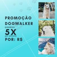 Que tal aproveitar essa promoção especial e dar um pouquinho de alegria ao seu dog 🐶? Aproveite nosso passeio de 5x por semana , essa promoção é por tempo limitado! #pet #ahazou #dog #doglovers #Dogwalker