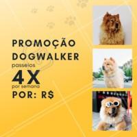 Que tal aproveitar essa promoção especial e dar um pouquinho de alegria ao seu dog 🐶? Aproveite nosso passeio de 4x por semana, essa promoção é por tempo limitado! #pet #ahazou #dog #doglovers #Dogwalker