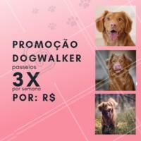 Que tal aproveitar essa promoção especial e dar um pouquinho de alegria ao seu dog 🐶? Aproveite nosso passeio de 3x por semana, essa promoção é por tempo limitado! #pet #ahazou #dog #doglovers #Dogwalker