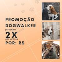 Que tal aproveitar essa promoção especial e dar um pouquinho de alegria ao seu dog 🐶? Aproveite nosso passeio de 2x por semana, essa promoção é por tempo limitado! #pet #ahazou #dog #doglovers #Dogwalker