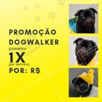Que tal aproveitar essa promoção especial e dar um pouquinho de alegria ao seu dog 🐶? Aproveite nosso passeio de 1x por semana, essa promoção é por tempo limitado! #pet #ahazou #dog #doglovers #Dogwalker