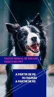 Seu cachorro fica muito tempo sozinho? Você não tempo para brincar ou sair para passear com ele? Nós temos a solução. Traga-o para a nossa creche e deixe seu amigão MUITO feliz! #pet #creche #daycare #ahazoupet #dog #hotelpet
