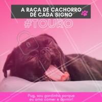 Os taurinos sabem viver o melhor da vida, comer e dormir! Hahaha quem concorda? 😂❤️️♉ #signos #pet #ahazoupet #dogs #touro