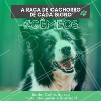 Falantes, inteligentes, e muito divertidos! Hahaha quem concorda? 😂❤️️♊ #signos #pet #ahazoupet #dogs #gemeos