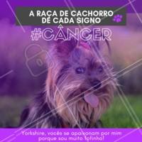 Impossível não se apaixonar pela fofura e pelo drama dos cancerianos! Hahaha quem concorda? 😂❤️️♋ #signos #pet #ahazoupet #dogs #cancer