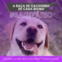 Hoje é festa lá no meu apêee! Hoje não, todos os dias! Hahaha quem concorda? 😂❤️️♐ #signos #pet #ahazoupet #dogs #sagitario