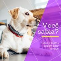 Você sabia que seu pet pode doar sangue e ajudar outros animais? #pet #saude #doacaodesanguepet #ahazou #veterinario #dogs #cats