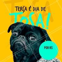 Não perca nossa promoção de terça-feira! Agende um horário para o seu pet #petshop #pet #ahazou #combo #banho #terca