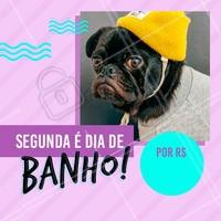 Não perca nossa promoção de segunda-feira! Agende um horário para o seu pet #petshop #pet #ahazou #combo #banho #segunda