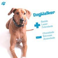 Você sabia que um DogWalker trás muitos benefícios para o seu dog? Confira! #dog #passeio #dogwlker #saude #ahazou #lazer