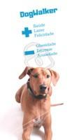 Você sabia que um DogWalker trás muitos benefícios para o seu dog? Confira! #dog #passeio #dogwalker #ahazoupet #lazer #saude