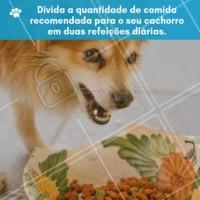 """Você sabe como dividir a ração do seu dog? Olha só que eficiente, prático e ajuda o seu pet a não se sentir """"cheio"""" logo na primeira refeição. #dog #ahazu #pet #refeicao"""