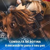 Nossos pets também precisam de consulta de rotina. Além, é claro, de todas as vacinas sempre estarem em dia! #consulta #vacinas #ahazoupet #veterinario