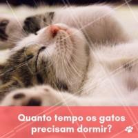 Na média, os gatos dormem 18 horas por dia, podendo variar de acordo com a idade. Mas você deve se atentar para que o seu peludo não se torne sedentário. Portanto, que tal reservar uma parte do seu tempo para brincar e se divertir junto com ele? Caso você perceba que seu gatinho tem dormido mais do que de costume, converse com seu veterinário de confiança. Alterações no sono podem indicar que algo não está bem. #pet #gatos #ahazoupet #cat #soneca