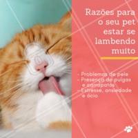 Se observar que seu gatinho está se lambendo excessivamente, levo-o até um médico veterinário. Assim, esse profissional poderá indicar o melhor tratamento de acordo com a causa desse comportamento. #pet #ahazoupet #lambidas #cat