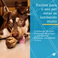 Se observar que seu cão está se lambendo excessivamente, levo-o até um médico veterinário. Assim, esse profissional poderá indicar o melhor tratamento de acordo com a causa desse comportamento. #pet #ahazoupet #lambidas #dogs