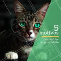 1. Você conhecerá melhor sua personalidade⠀ 2. O gato adulto tende a ser mais calmo⠀⠀⠀⠀⠀⠀⠀⠀ 3. Gatos adultos são bem higiênicos⠀⠀⠀⠀⠀⠀⠀⠀⠀ 4. Eles costumam vir socializados⠀⠀⠀⠀⠀⠀⠀⠀ 5. Todos merecem uma chance, inclusive os adultos e idosos. 🐱❤️️ #pet #ahazoupet #gatos #cats #adocao