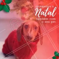 Comemorar o Natal ao lado do pet? CLARO! #pet #énatal #doglovers #ahazou #amornonatal