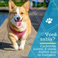 Um cão consegue escutar um som 4 vezes mais longe e mais alto que uma pessoa. Também detectam sons de frequências menores e maiores do que as que a gente detecta. 🐶 #pet #dog #ahazoupet #som
