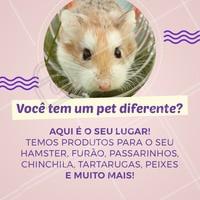 Não perca tempo e venha conhecer os nossos produtos, seu animalzinho merece! #pet #produtos #ahazouapp #ahazoupet #petshop #racao #petiscos #acessorios
