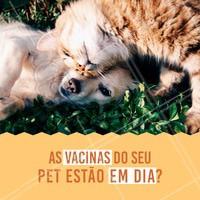 As vacinas são prioridades para a saúde do seu bichinho. Traga-o para os nossos especialistas! #veterinario #vet #pet #ahazouapp #ahazoupet #vacinas #checkup #consulta
