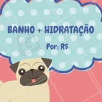 Seu pet merece um dia de beleza 🐶🐱❤️️ Agende um horário! #petshop #pet #ahazoupet #banho #tosa