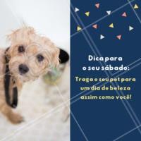 Me leva para o banho, mamãe? 🐶❤️️ #petshop #banho #tosa #pets #ahazou #sabado