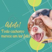 Adote seu pet e tenha o privilégio de conviver com a forma mais pura, verdadeira e incondicional de amor! #adote #pet #amorpelosanimais #ahazou #amorincondicional