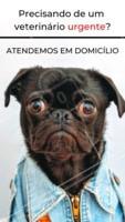 Precisando de atendimento veterinário em domicílio? Entre em contato com a gente pelo whatsapp XXXXX #veterinario #pets #ahazou #atendimentoemdomicilio